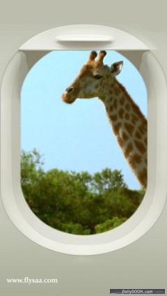 SAA Giraffe